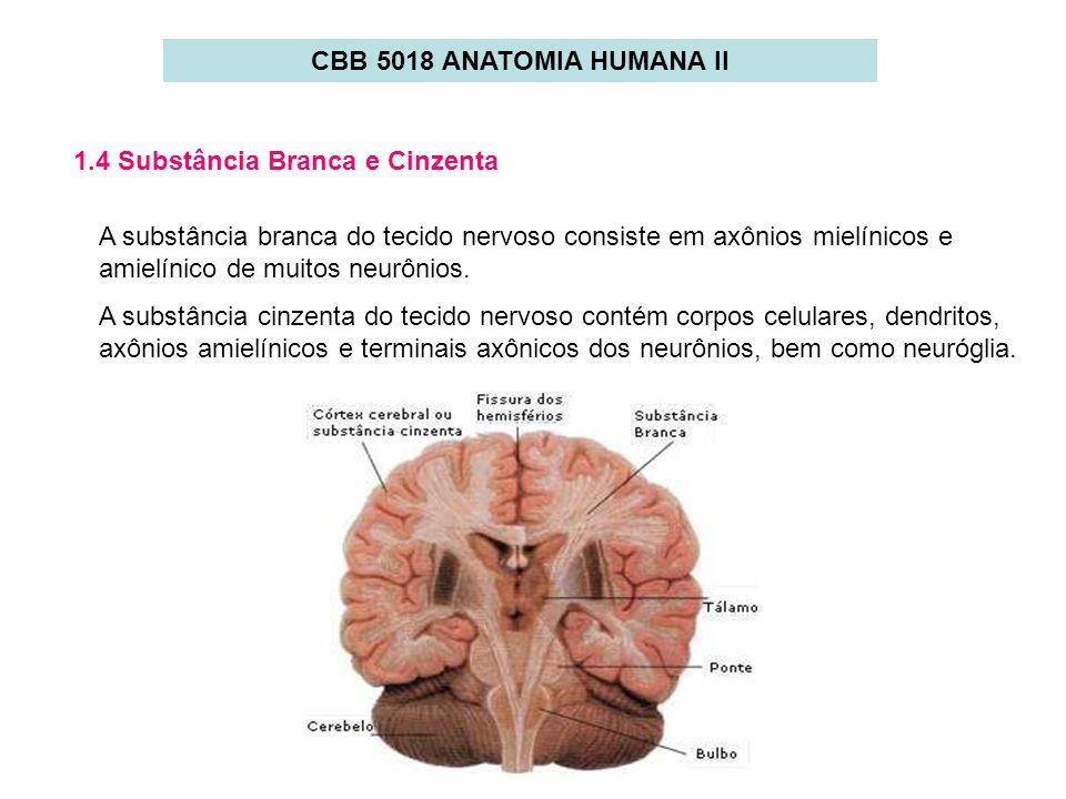 CBB 5018 ANATOMIA HUMANA II1.4 Substância Branca e Cinzenta.
