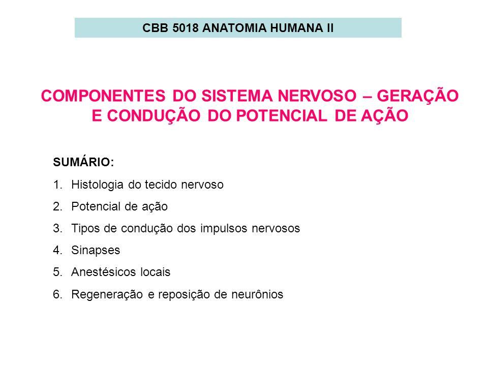 CBB 5018 ANATOMIA HUMANA II COMPONENTES DO SISTEMA NERVOSO – GERAÇÃO E CONDUÇÃO DO POTENCIAL DE AÇÃO.