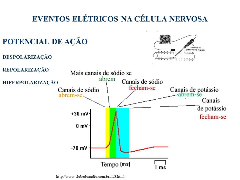 EVENTOS ELÉTRICOS NA CÉLULA NERVOSA