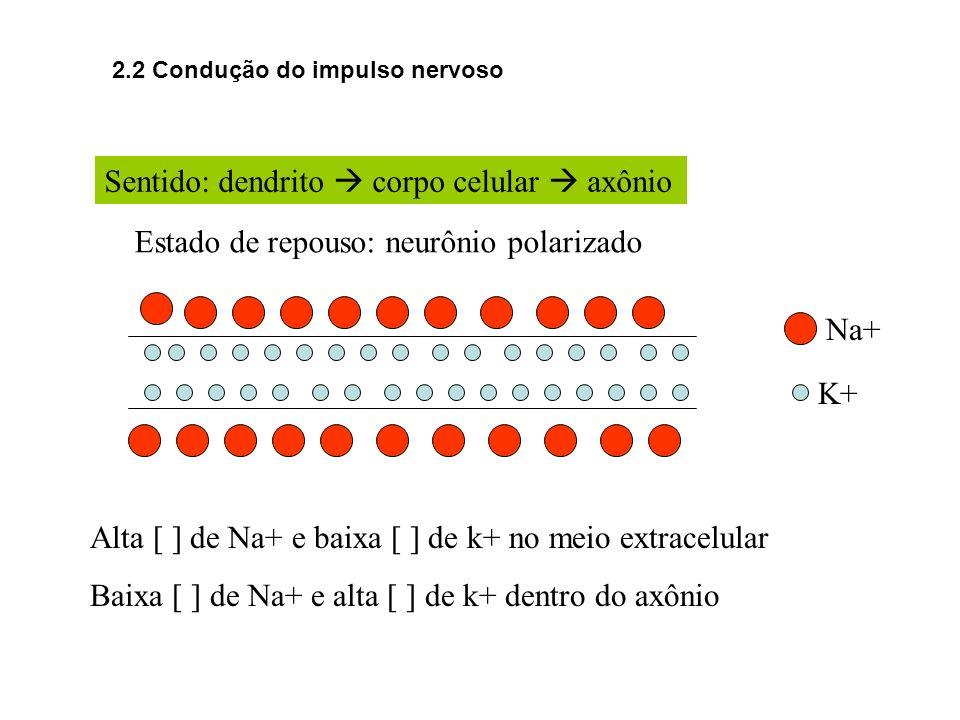 Sentido: dendrito  corpo celular  axônio