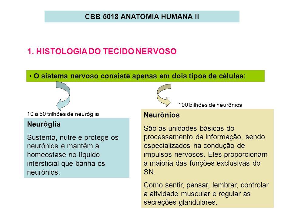 1. HISTOLOGIA DO TECIDO NERVOSO