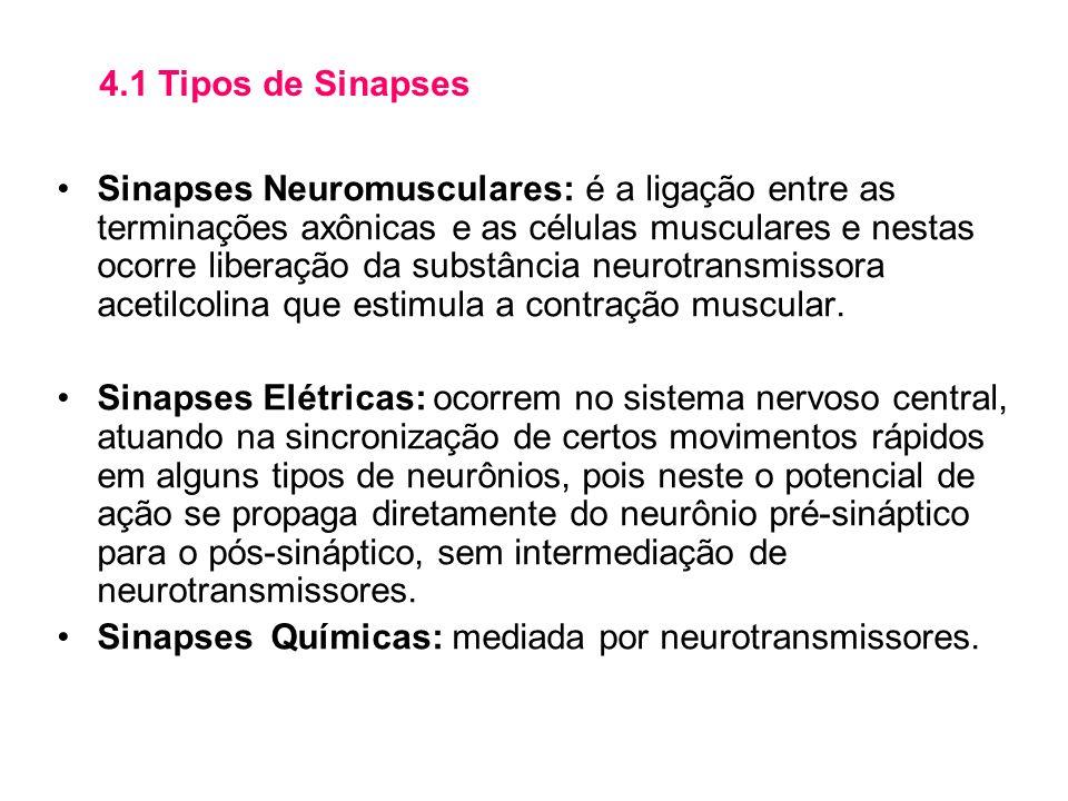 4.1 Tipos de Sinapses