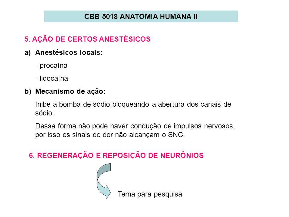 CBB 5018 ANATOMIA HUMANA II5. AÇÃO DE CERTOS ANESTÉSICOS. Anestésicos locais: - procaína. - lidocaína.