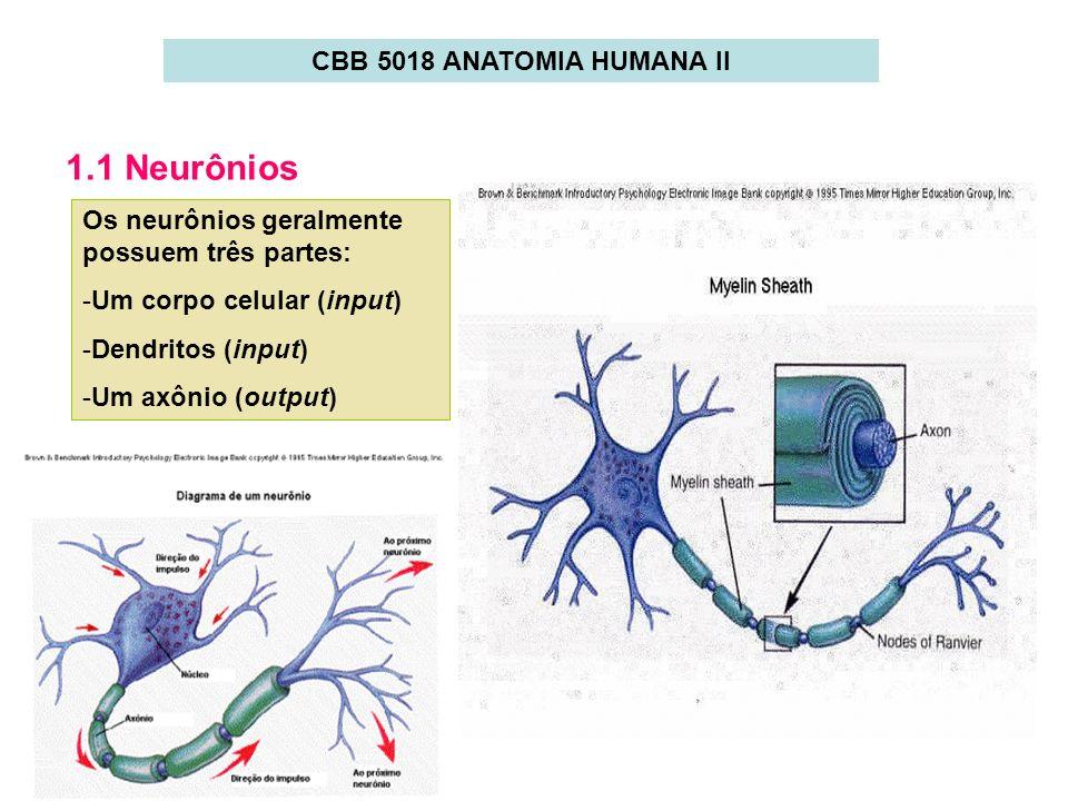 1.1 Neurônios CBB 5018 ANATOMIA HUMANA II
