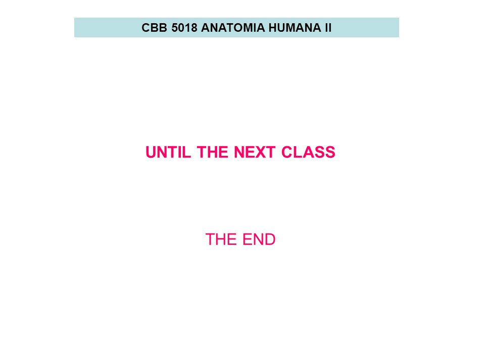 CBB 5018 ANATOMIA HUMANA II UNTIL THE NEXT CLASS THE END