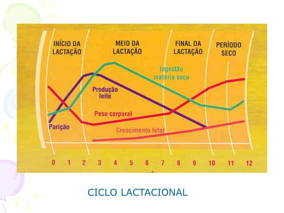 CICLO LACTACIONAL