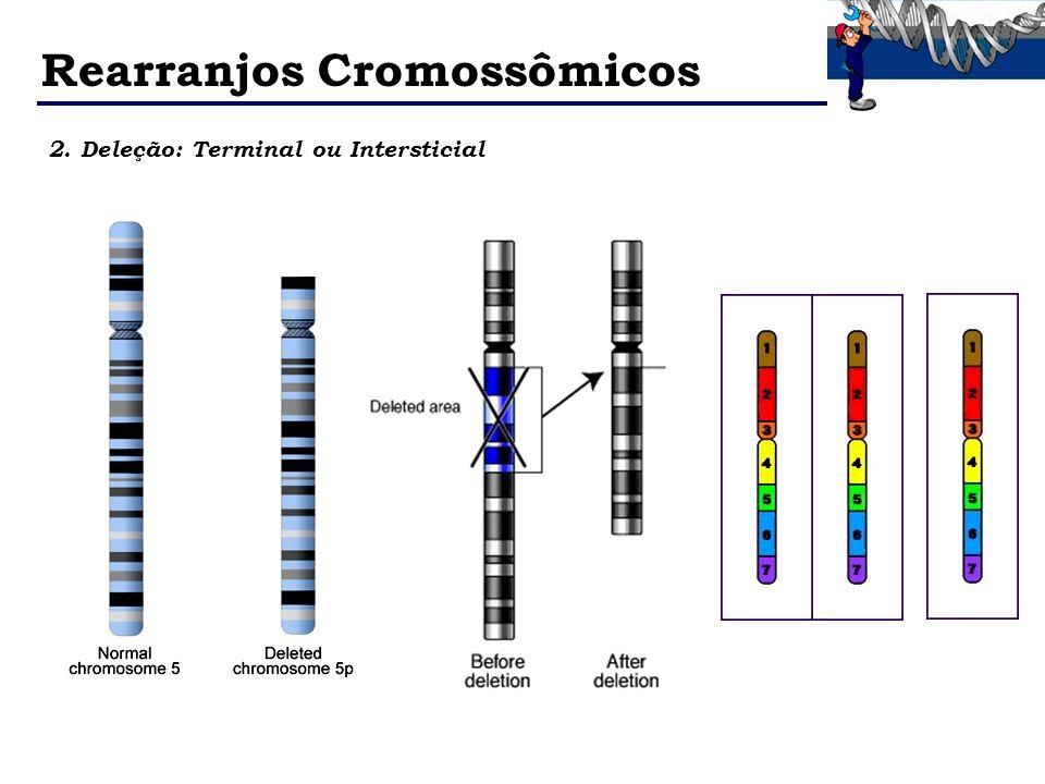 Rearranjos Cromossômicos