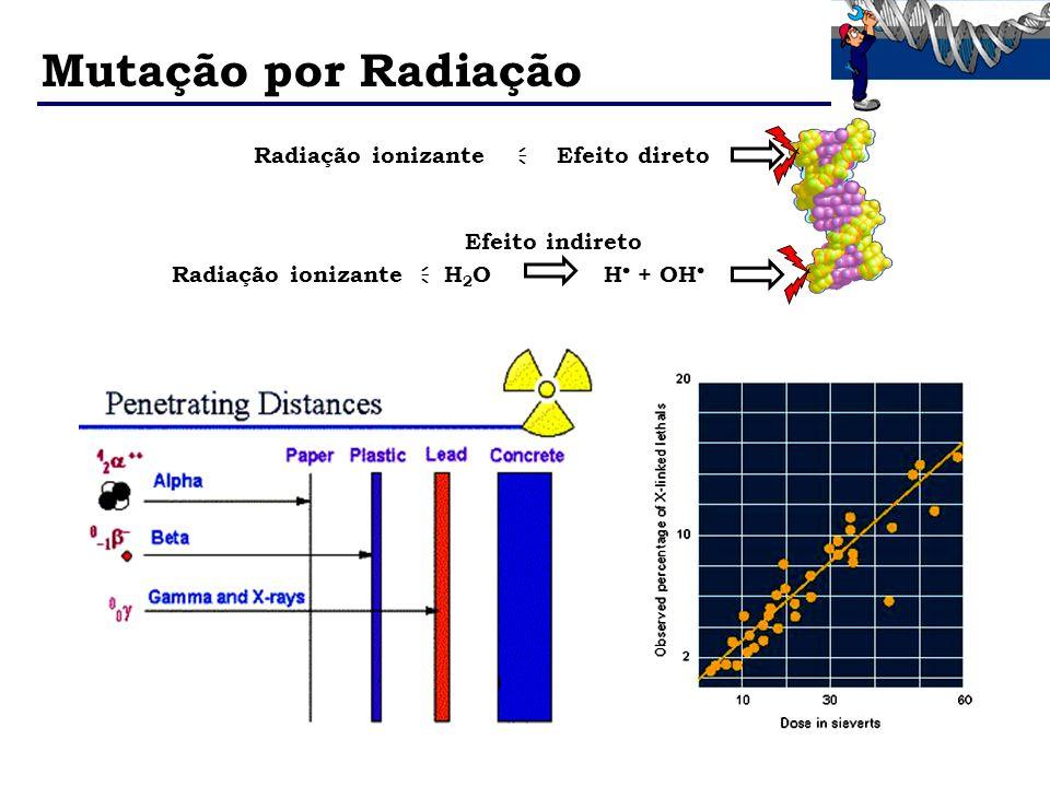 Mutação por Radiação Radiação ionizante H2O H + OH