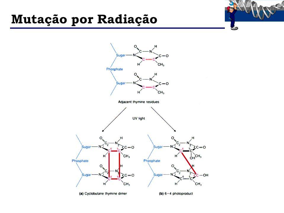 Mutação por Radiação