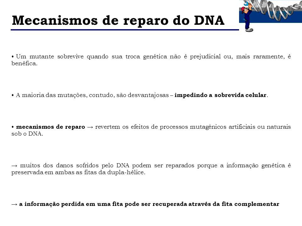 Mecanismos de reparo do DNA