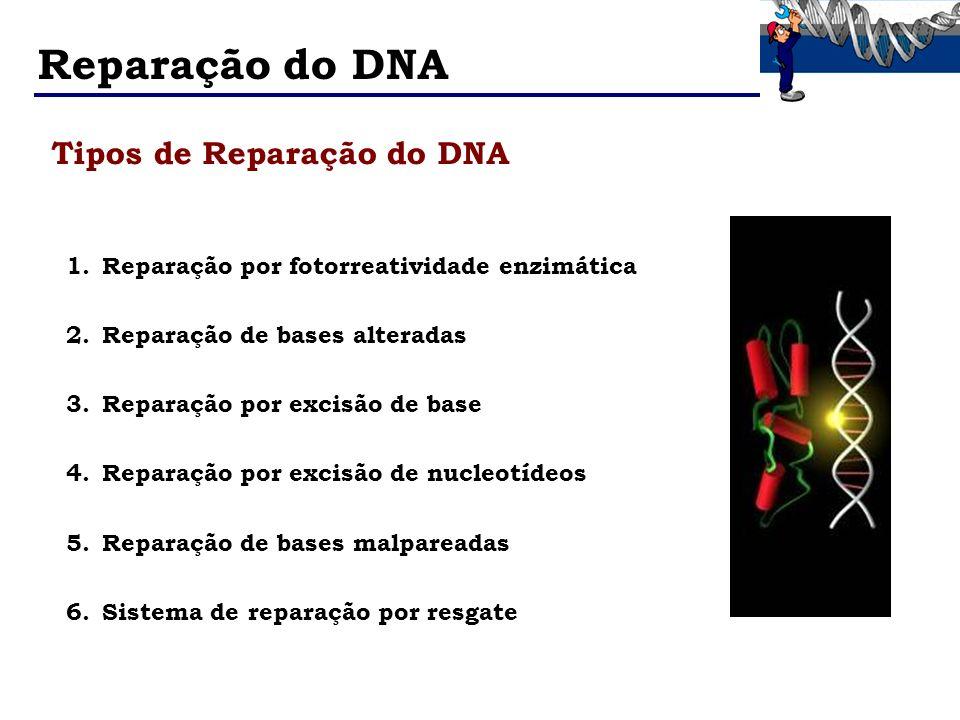 Reparação do DNA Tipos de Reparação do DNA