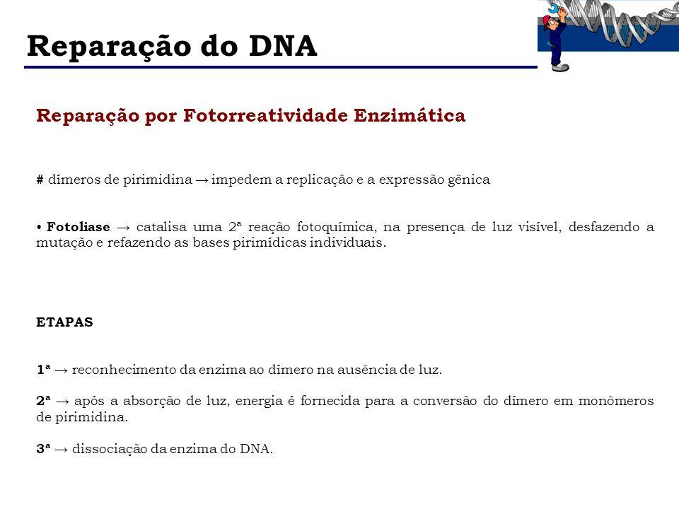 Reparação do DNA Reparação por Fotorreatividade Enzimática