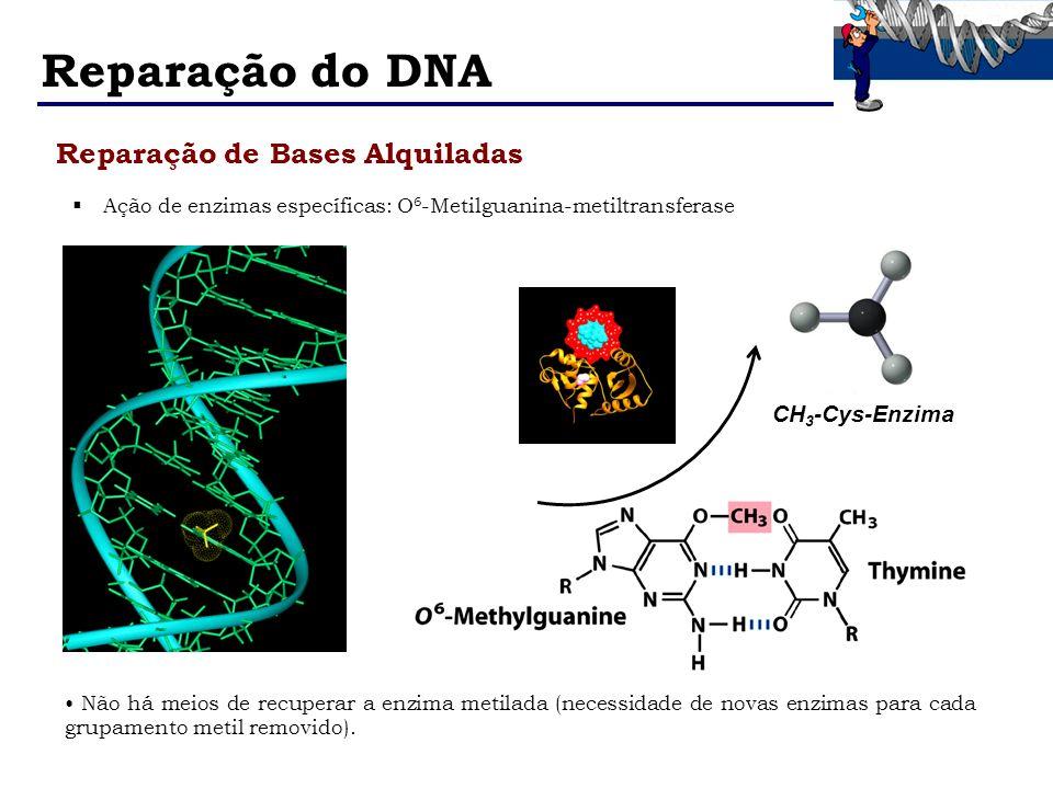 Reparação do DNA Reparação de Bases Alquiladas CH3-Cys-Enzima