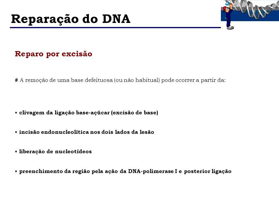 Reparação do DNA Reparo por excisão