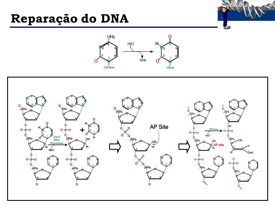 Reparação do DNA
