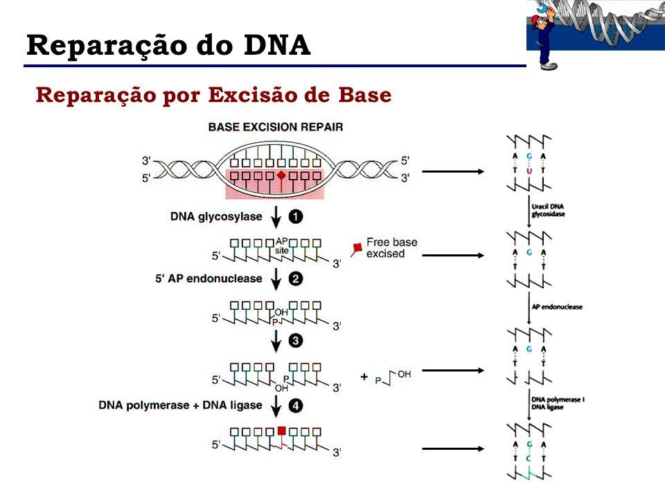 Reparação do DNA Reparação por Excisão de Base