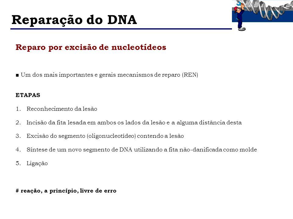 Reparação do DNA Reparo por excisão de nucleotídeos
