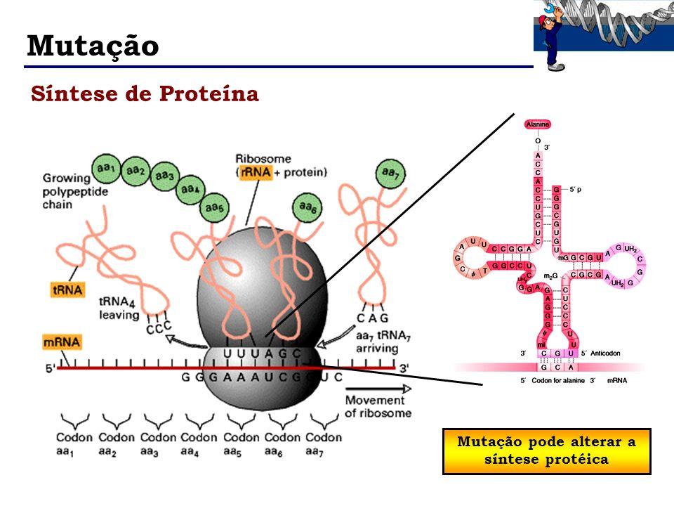 Mutação pode alterar a síntese protéica
