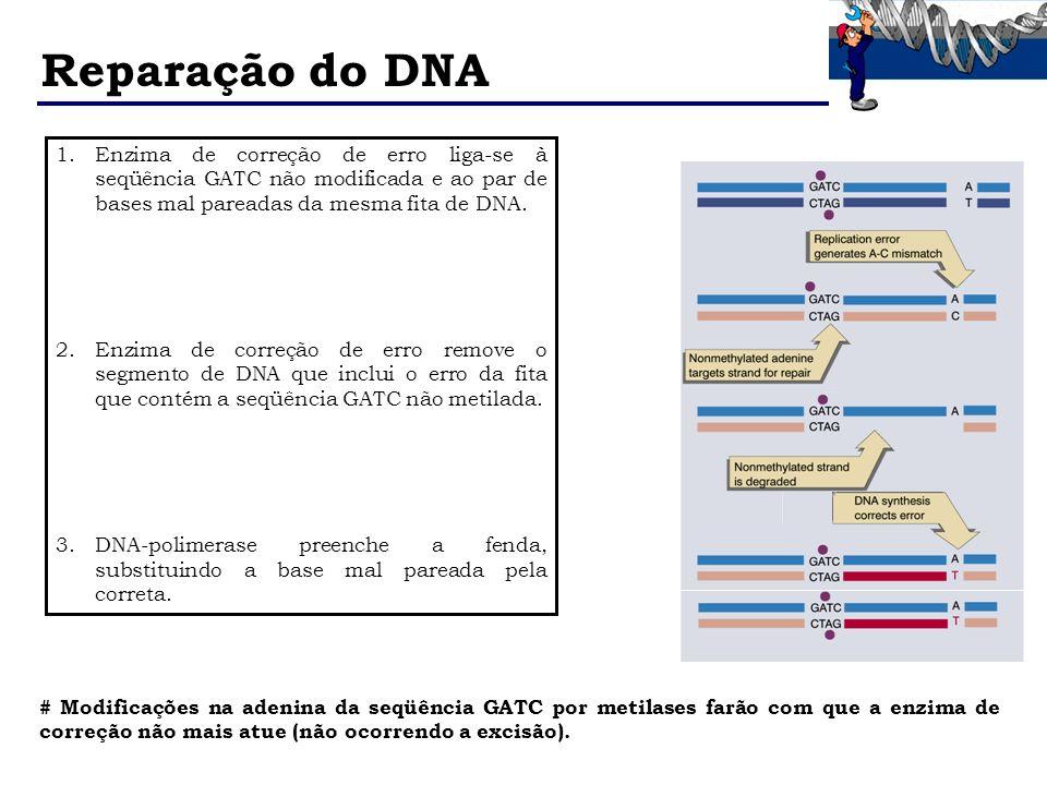 Reparação do DNAEnzima de correção de erro liga-se à seqüência GATC não modificada e ao par de bases mal pareadas da mesma fita de DNA.