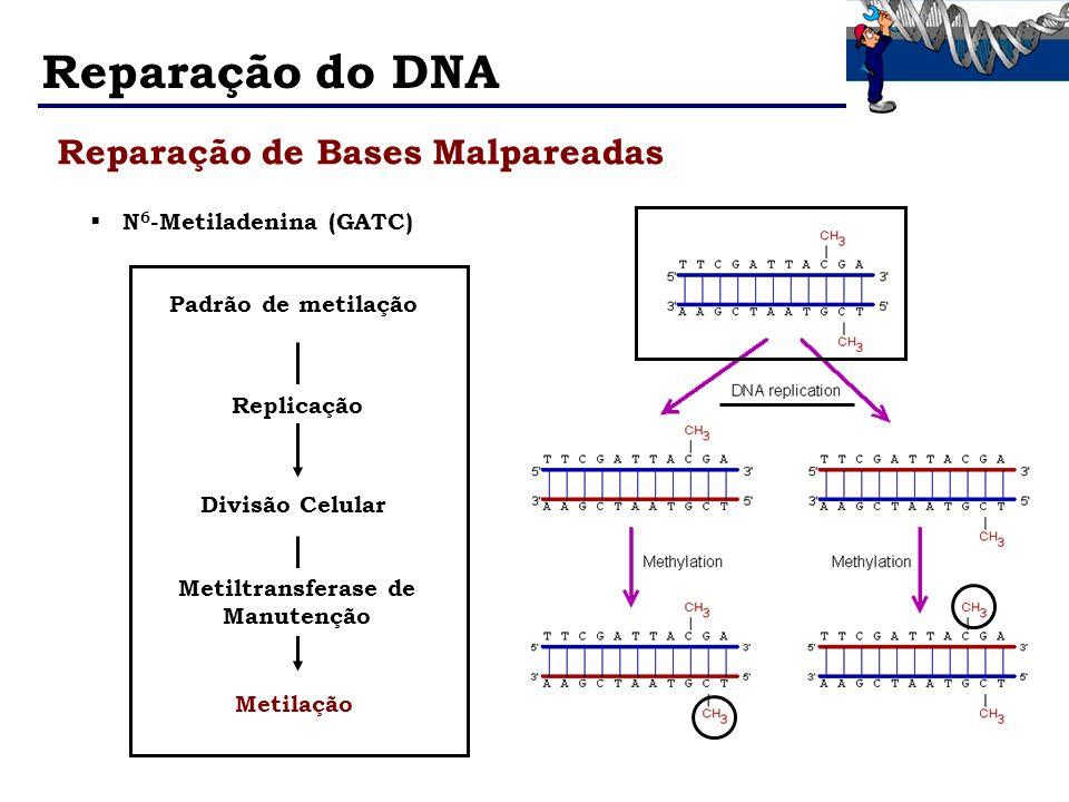 Metiltransferase de Manutenção