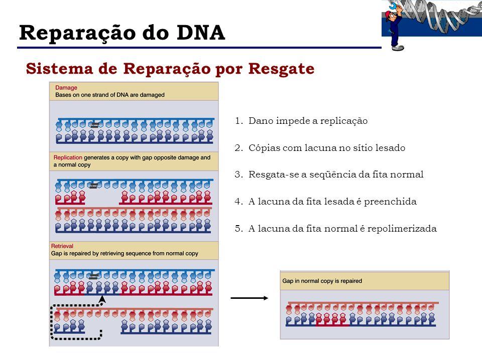 Reparação do DNA Sistema de Reparação por Resgate