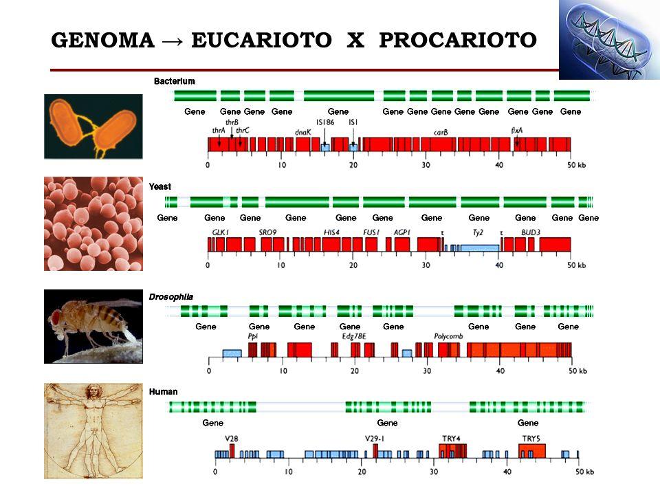 GENOMA → EUCARIOTO X PROCARIOTO