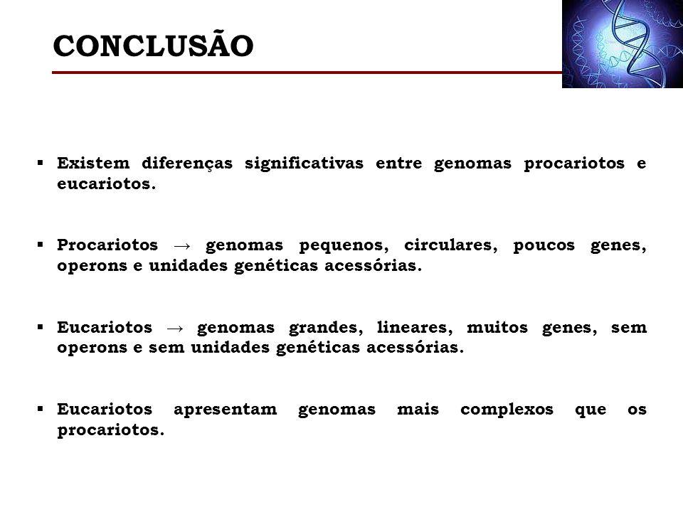 CONCLUSÃO Existem diferenças significativas entre genomas procariotos e eucariotos.