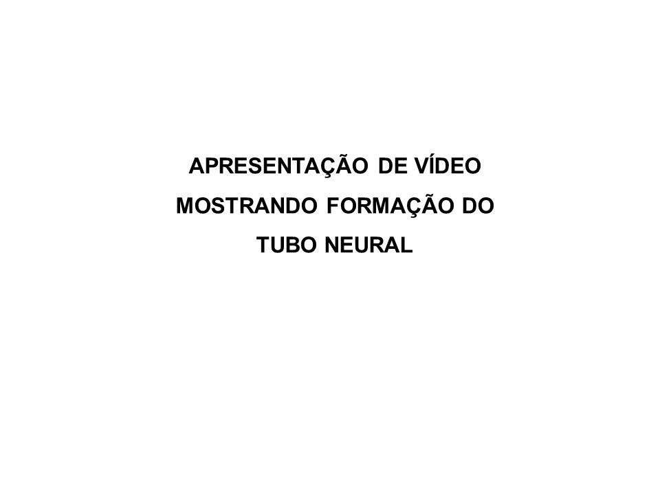 APRESENTAÇÃO DE VÍDEO MOSTRANDO FORMAÇÃO DO TUBO NEURAL