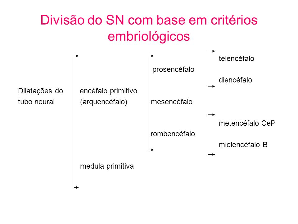 Divisão do SN com base em critérios embriológicos