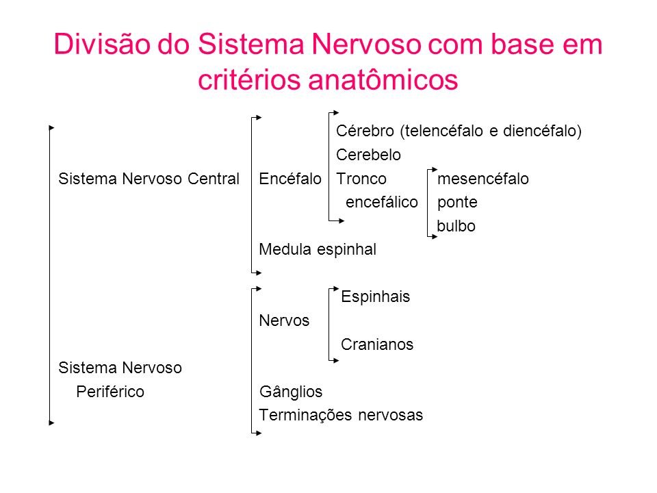 Divisão do Sistema Nervoso com base em critérios anatômicos