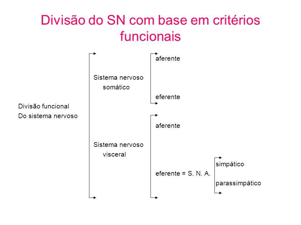 Divisão do SN com base em critérios funcionais