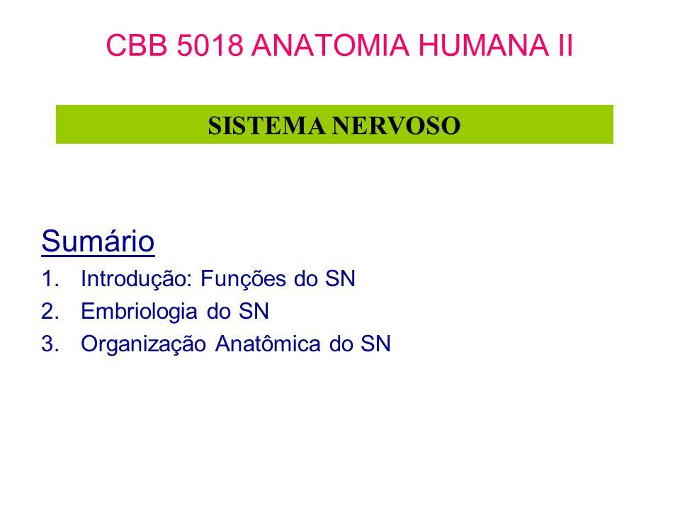 CBB 5018 ANATOMIA HUMANA II Sumário SISTEMA NERVOSO