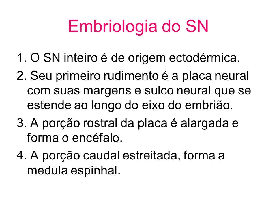 Embriologia do SN 1. O SN inteiro é de origem ectodérmica.