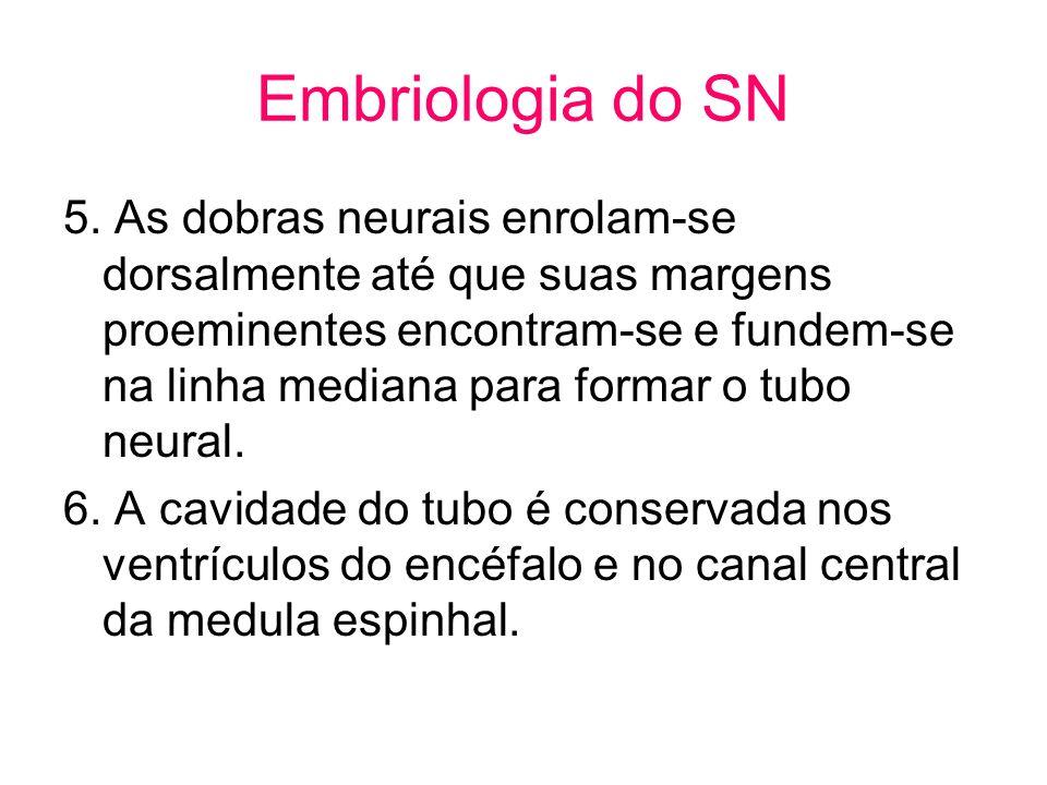 Embriologia do SN