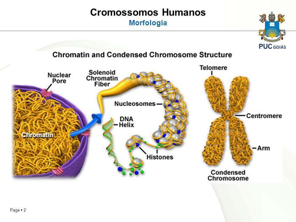 Cromossomos Humanos Morfologia