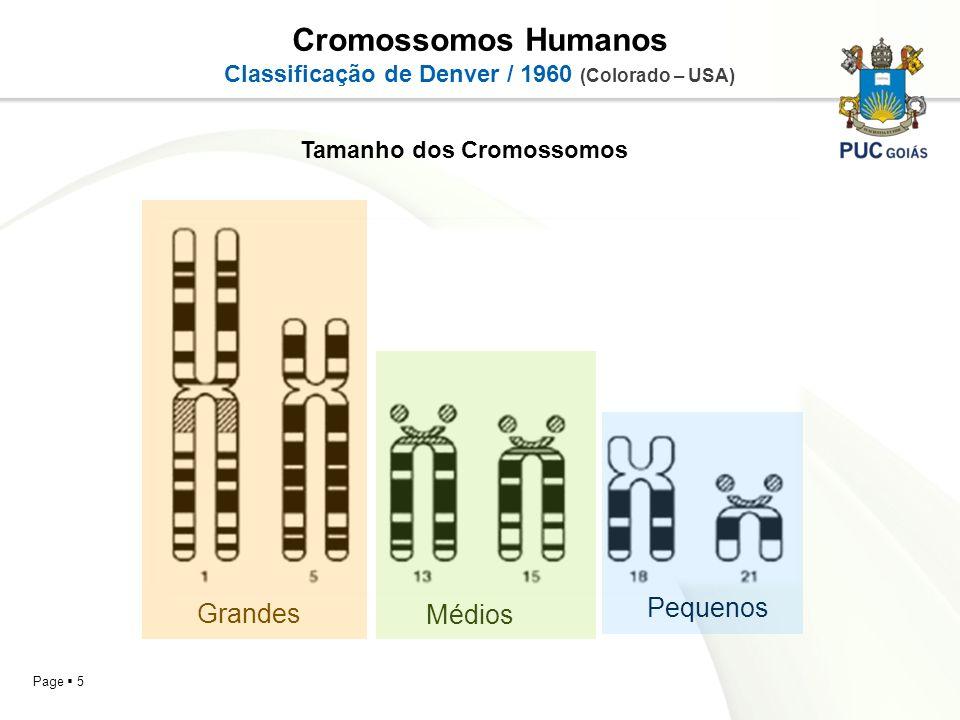 Cromossomos Humanos Pequenos Grandes Médios