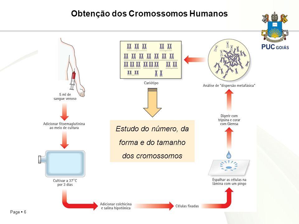 Obtenção dos Cromossomos Humanos