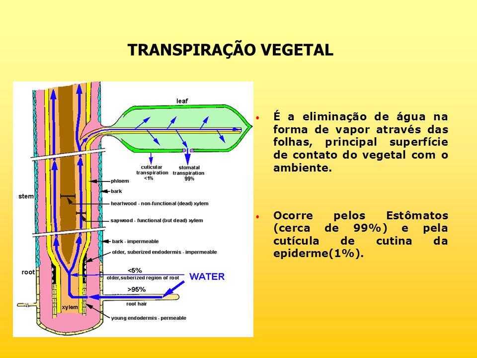 TRANSPIRAÇÃO VEGETAL É a eliminação de água na forma de vapor através das folhas, principal superfície de contato do vegetal com o ambiente.