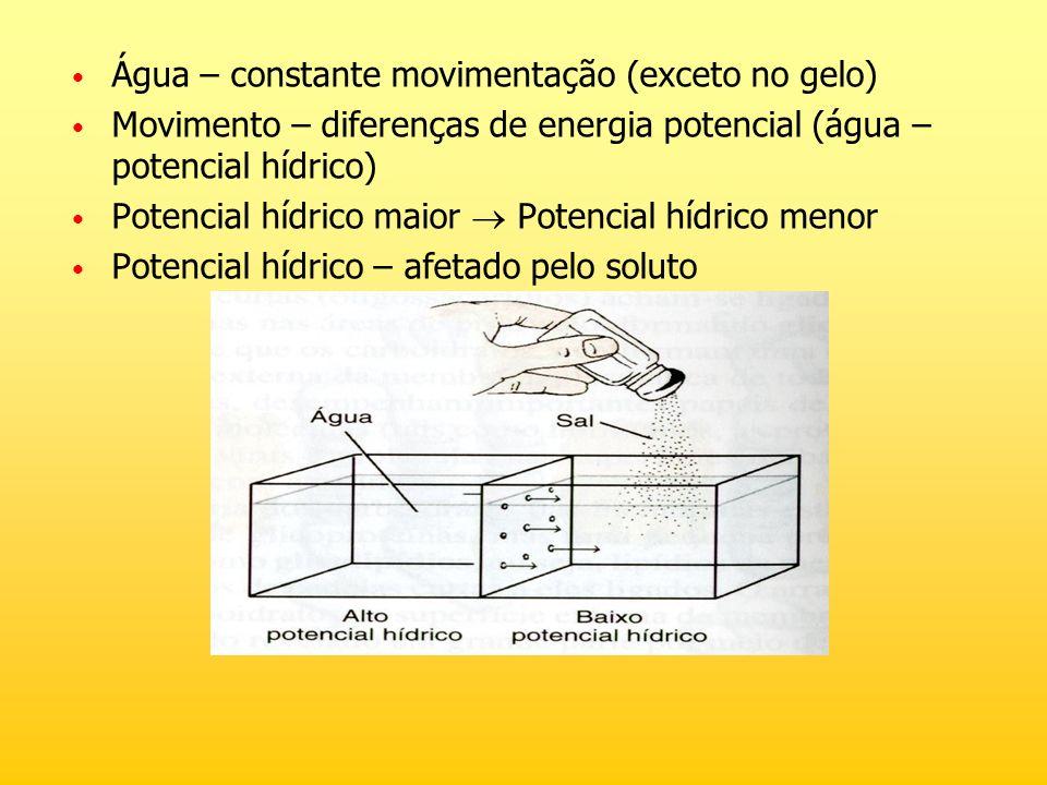 Água – constante movimentação (exceto no gelo)