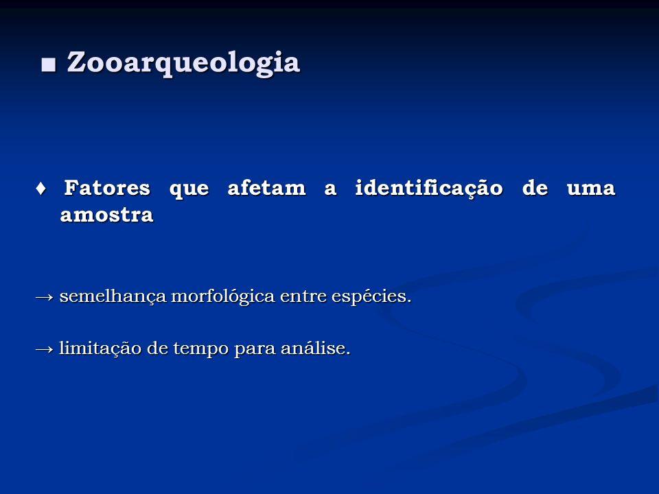 ■ Zooarqueologia ♦ Fatores que afetam a identificação de uma amostra