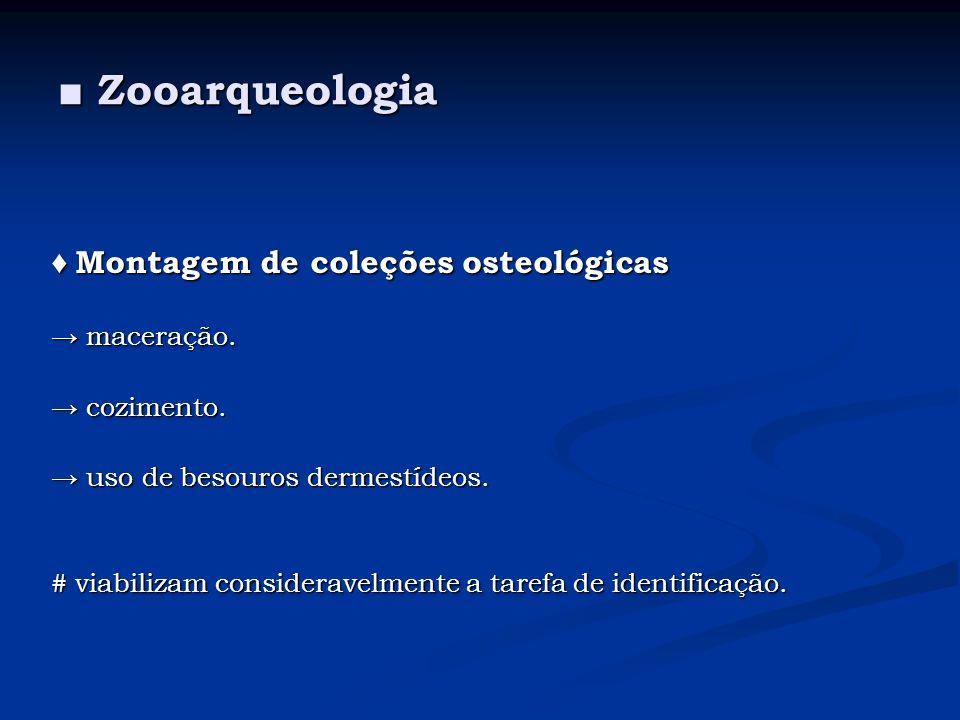 ■ Zooarqueologia ♦ Montagem de coleções osteológicas → maceração.