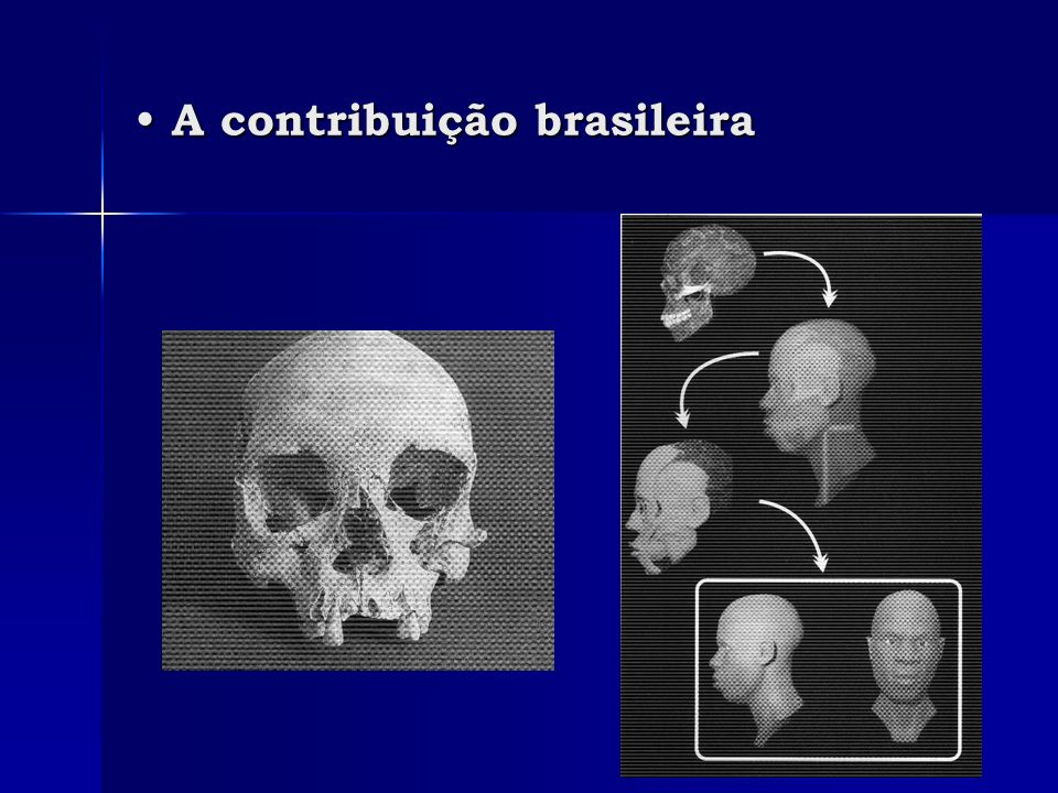 A contribuição brasileira