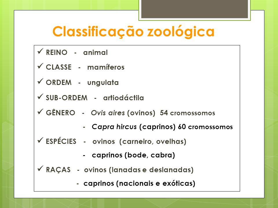 Classificação zoológica