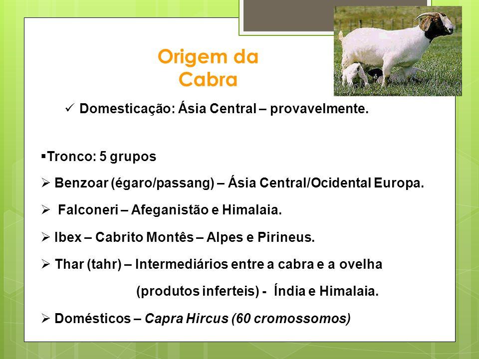 Origem da Cabra Domesticação: Ásia Central – provavelmente.