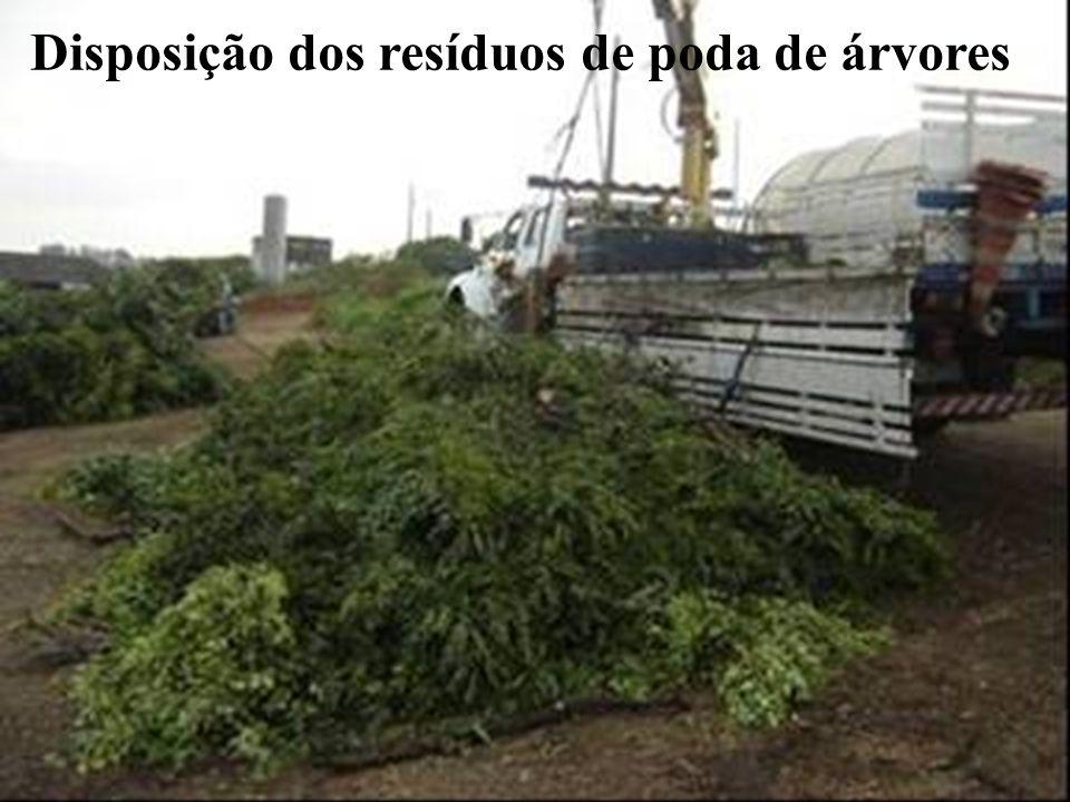 Disposição dos resíduos de poda de árvores