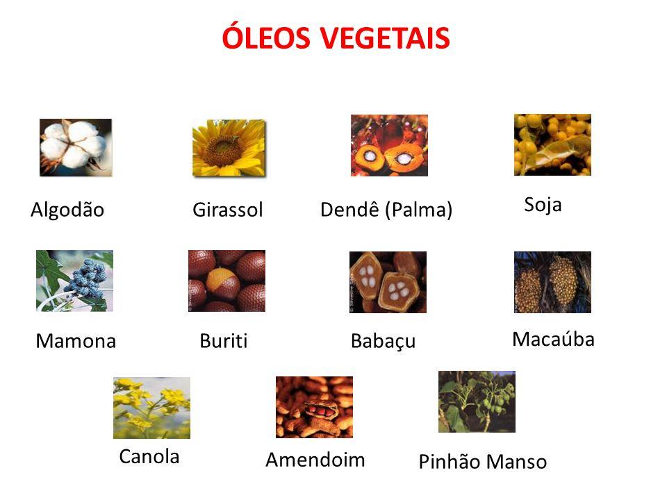 ÓLEOS VEGETAIS Soja Algodão Girassol Dendê (Palma) Mamona Buriti