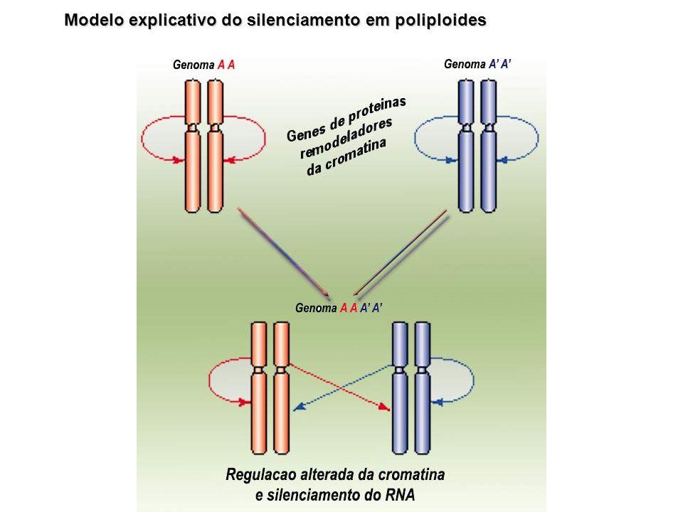 Modelo explicativo do silenciamento em poliploides