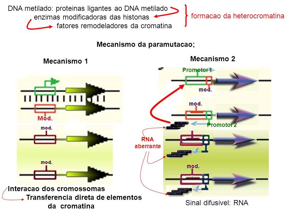 DNA metilado: proteinas ligantes ao DNA metilado