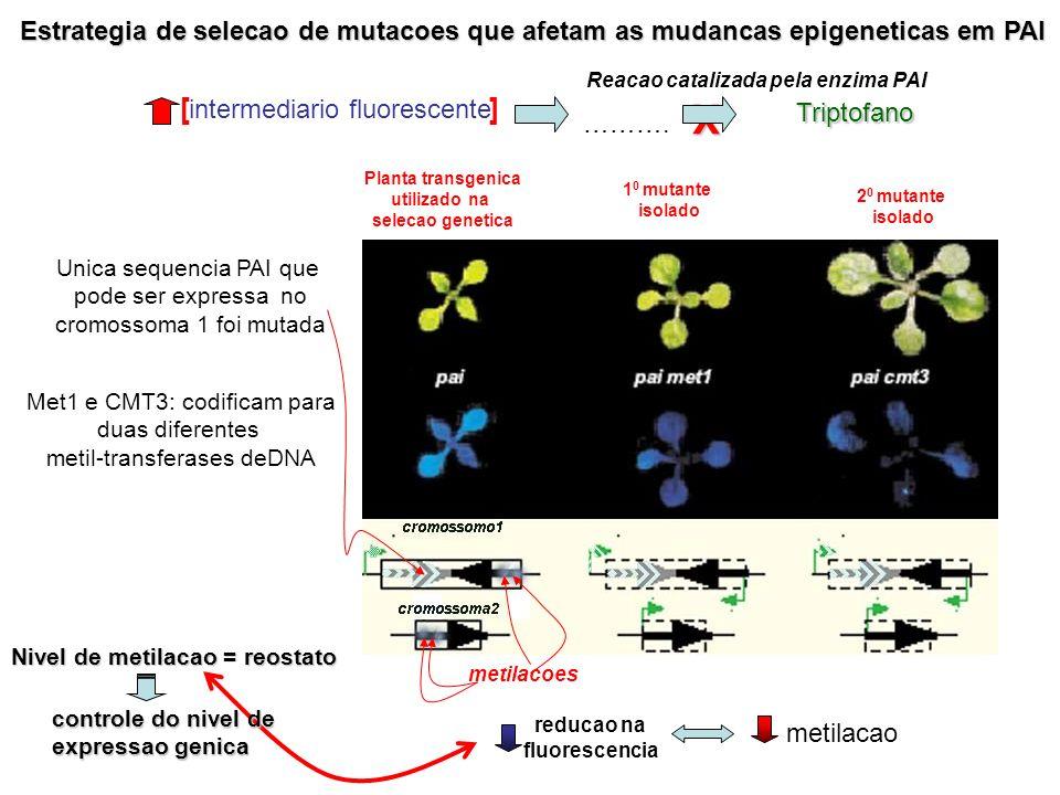 Estrategia de selecao de mutacoes que afetam as mudancas epigeneticas em PAI