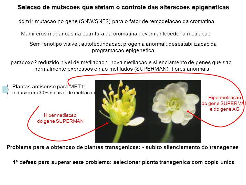 Selecao de mutacoes que afetam o controle das alteracoes epigeneticas